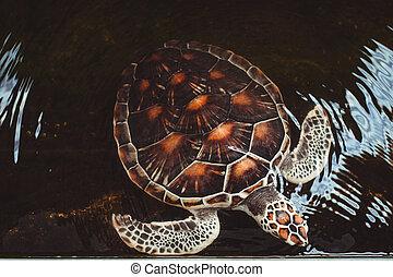 Tortuga marina nadando en un estanque