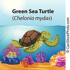 Tortuga marina verde en el océano