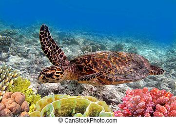 Tortuga marina verde nadando en el mar del océano