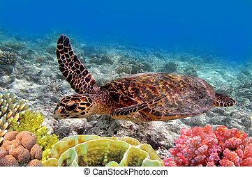 tortuga, natación, verde, mar, océano