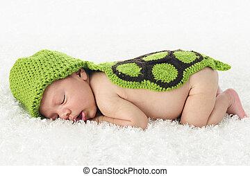 Tortuga recién nacida dormida