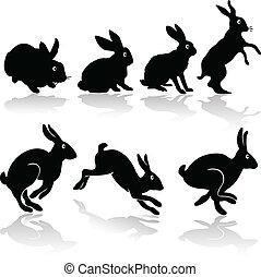 Trabajo de conejos
