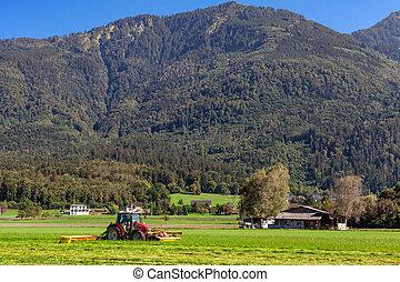 tractor de la granja, ganado, campo hierba, corte, alimentación