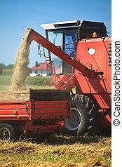 Tractor y combinar cosecha de trigo