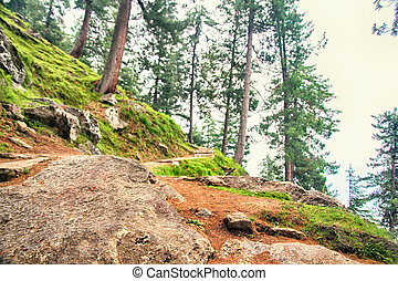 Trail a través de exuberante bosque verde en las montañas de Himalaya, Kullu Valley, Heachal Pradesh, India