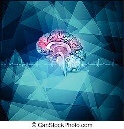 Trasfondo cerebral humano