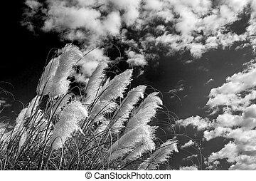 Trasfondo de plumas blancas y negras