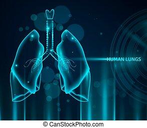 Trasfondo de pulmones humanos