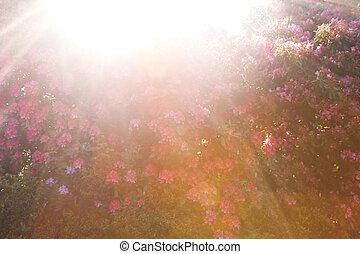 Trasfondo de rododendro Sunburst