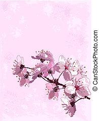 Trasfondo flor de cerezo