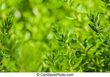 Trasfondo fresco de hierba verde