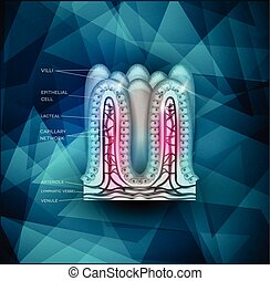 Trasfondo intestinal villi