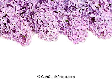 Trasfondo lila
