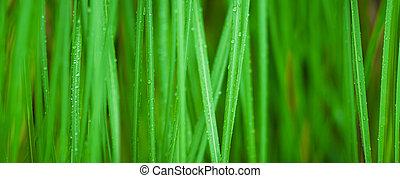 Trasfondo macro de hierba verde
