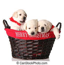 Tres cachorros de Navidad