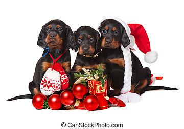 Tres cachorros serristas sobre blanco, Navidad