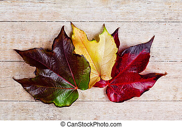 Tres hojas de otoño
