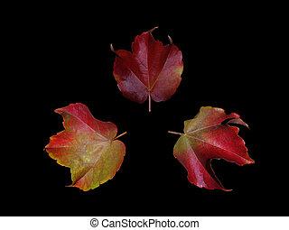 Tres hojas de otoño en círculo