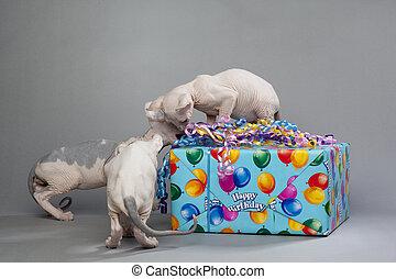Tres lindos cachorros de regalo de apertura