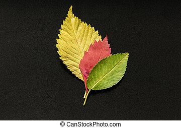 tres, otoño sale, negro, backgtound