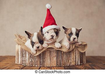 tres, sombrero, navidad, familia , alegre, llevando, perritos