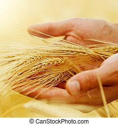Trigo. Concepto de cosecha