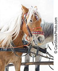 trineo, caballo, transporte, atracción turística, alternativa, invierno