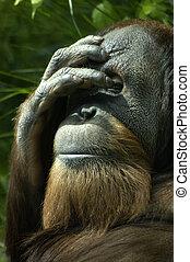 Triste orangután