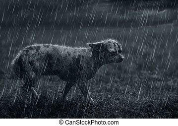 Triste perro solitario bajo la lluvia