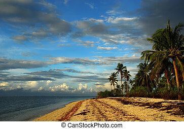 tropical, prístino, isla