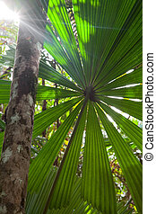 tropical, prístino, selva tropical, plano de fondo