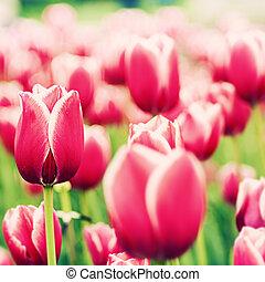 Tulipán rojo, antecedentes naturales abstractos