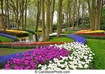 Tulipanes coloridos en el parque Keukenhof en Holanda