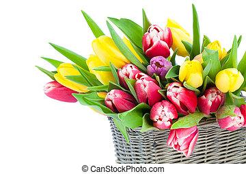 Tulipanes primavera en cesta de madera, en fondo blanco. Día de las madres felices, vida romántica, flores frescas