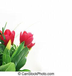 Tulipanes rojos flores