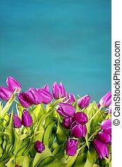 Tulipanes rosas flores verde azul del estudio