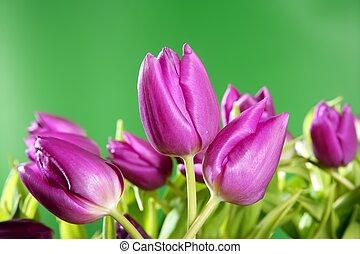 Tulipanes rosas flores verdes