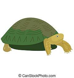 turtle., vector, ilustración