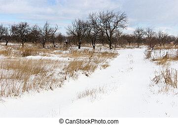 ucranio, país, paisaje de invierno