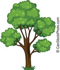 Un árbol alto