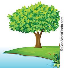 Un árbol cerca del cuerpo de agua