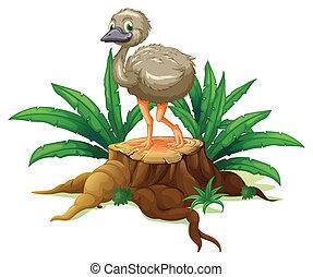 Un árbol con avestruz