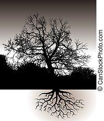 Un árbol con raíces
