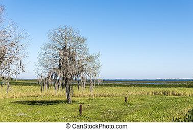 Un árbol, cubierto de musgo español