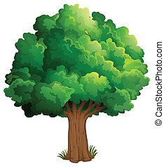Un árbol en el bosque