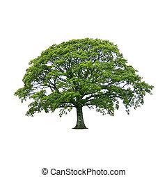 Un árbol en verano