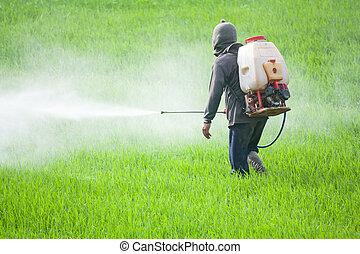 Un agricultor rociando pesticidas en el campo de arroz