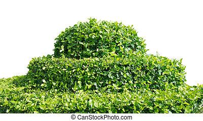 Un arbusto en blanco