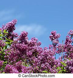 Un arbusto lila sobre el cielo azul