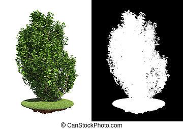 Un arbusto verde con máscara de raster.